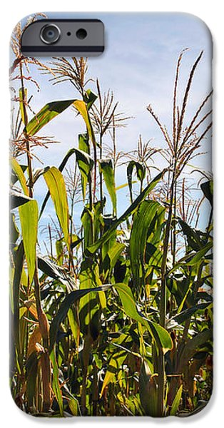 Corn Production iPhone Case by Carlos Caetano
