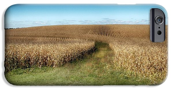 Sweet Corn Farm iPhone Cases - Corn Trail iPhone Case by Todd and candice Dailey