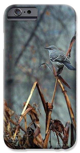 Birds iPhone Cases - Cornfield Mocker iPhone Case by Skip Willits