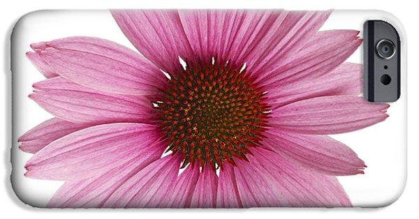 Echinacea iPhone Cases - Cornflower iPhone Case by Tony Cordoza