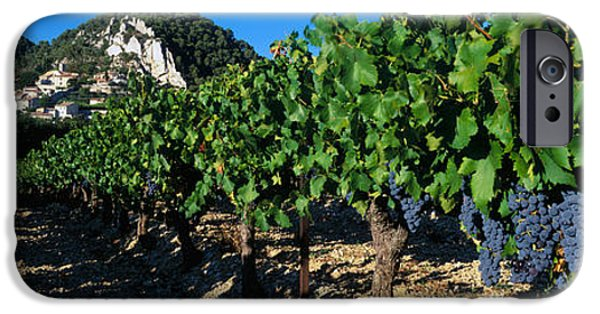 House iPhone Cases - Cote Du Rhone Vineyard, Provence, France iPhone Case by Panoramic Images
