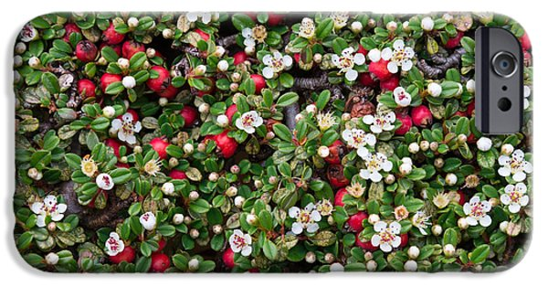 Berry Pyrography iPhone Cases - Cotoneaster bush background iPhone Case by Andrea Casali
