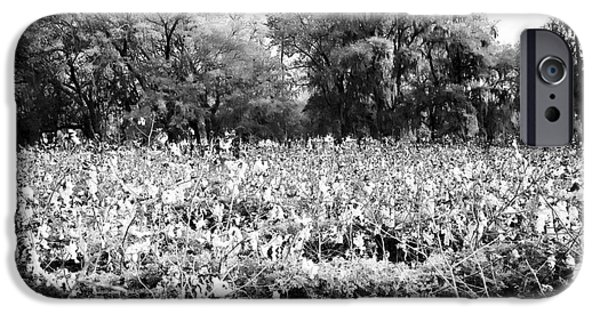 Printed Cotton iPhone Cases - Cotton Field iPhone Case by John Rizzuto