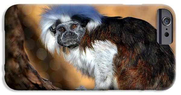 Gray Hair iPhone Cases - Cotton-Top Tamarin iPhone Case by Deena Stoddard