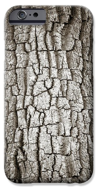 Cottonwood Bark 1 iPhone Case by Marilyn Hunt