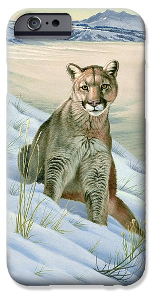 Yellowstone Park iPhone Cases - Cougar in Snow iPhone Case by Paul Krapf