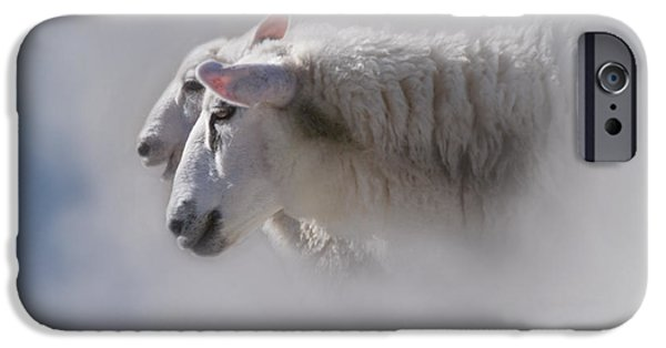 Zoologic iPhone Cases - Counting iPhone Case by Heiko Koehrer-Wagner