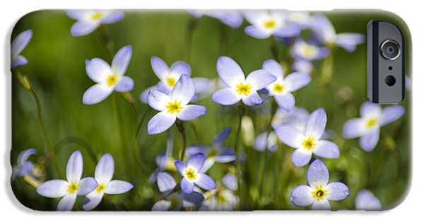 Botanical Photographs iPhone Cases - Country Bluet Flowers iPhone Case by Christina Rollo