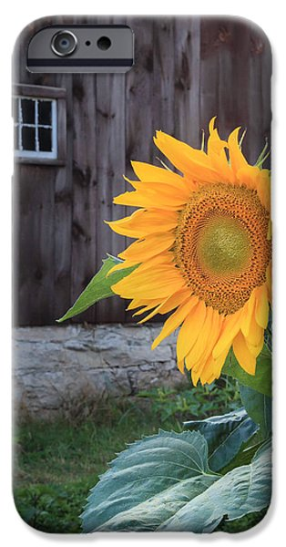 Buttonwood Farm iPhone Cases - Country Flower iPhone Case by Bill  Wakeley