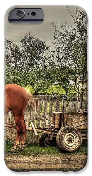 Country Life iPhone Case by Evelina Kremsdorf
