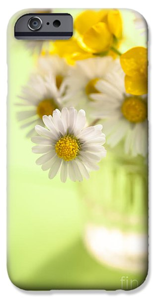 White Daisies iPhone Cases - Country Posy iPhone Case by Jan Bickerton