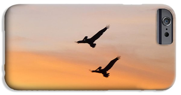 Couple Pyrography iPhone Cases - Couple of Brown Pelicans in Flight iPhone Case by Nicole Beland