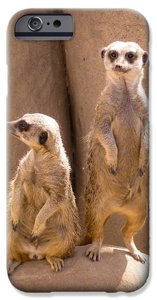 Meerkat Digital Art iPhone Cases - Couple Of Meerkats iPhone Case by Methune Hively