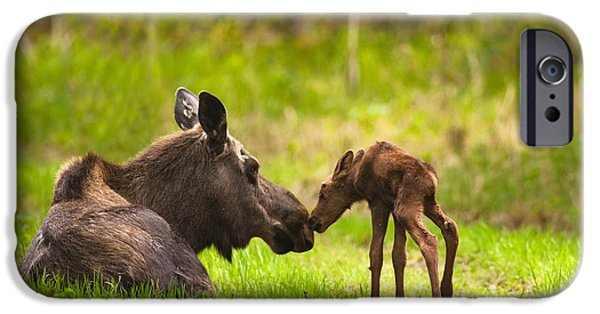 Best Sellers -  - Bonding iPhone Cases - Cow And Calf Moose In Grass, Kincaid iPhone Case by Michael Jones
