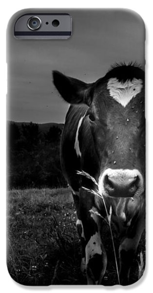 Cow iPhone Case by Bob Orsillo