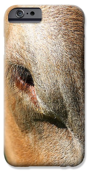 Cow Closeup 7D22397 iPhone Case by Wingsdomain Art and Photography