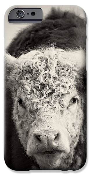 Agricultural iPhone Cases - Cow iPhone Case by Edward Fielding