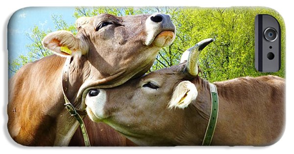 Swiss Horn iPhone Cases - Cow Love iPhone Case by Hilary Rhodes