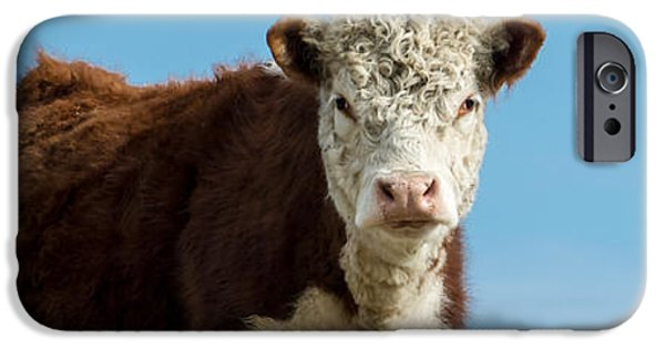 Agricultural iPhone Cases - Cow Panoramic Portrait iPhone Case by Edward Fielding