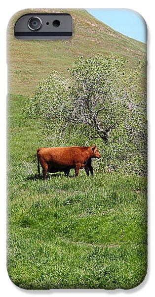 Cows Along The Rolling Hills Landscape of The Black Diamond Mines in Antioch California 5D22303 iPhone Case by Wingsdomain Art and Photography