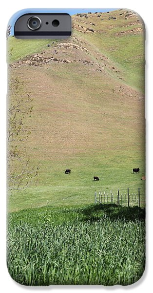 Cows Along The Rolling Hills Landscape of The Black Diamond Mines in Antioch California 5D22319 iPhone Case by Wingsdomain Art and Photography