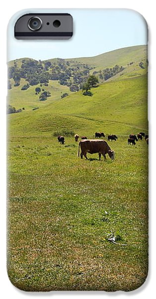 Cows Along The Rolling Hills Landscape of The Black Diamond Mines in Antioch California 5D22327 iPhone Case by Wingsdomain Art and Photography