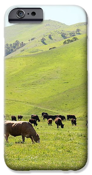 Cows Along The Rolling Hills Landscape of The Black Diamond Mines in Antioch California 5D22328 iPhone Case by Wingsdomain Art and Photography