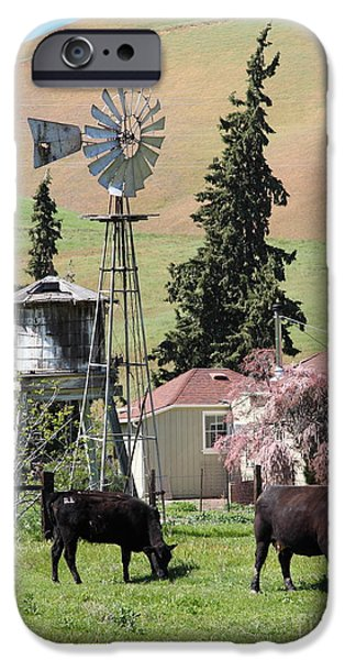 Cows Home On The Ranch At The Black Diamond Mines in Antioch California 5D22354 iPhone Case by Wingsdomain Art and Photography