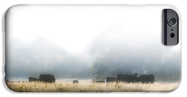 Fog Mist iPhone Cases - Cows in a Foggy Field iPhone Case by Bill Cannon