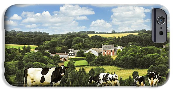 Rural iPhone Cases - Cows in a pasture in Brittany iPhone Case by Elena Elisseeva