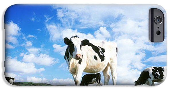Rural iPhone Cases - Cows In Field, Lake District, England iPhone Case by Panoramic Images