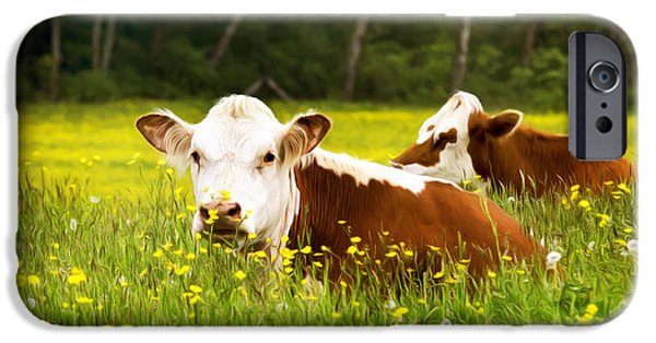 Moo Moo iPhone Cases - Cows in Meadow iPhone Case by Christina Rollo