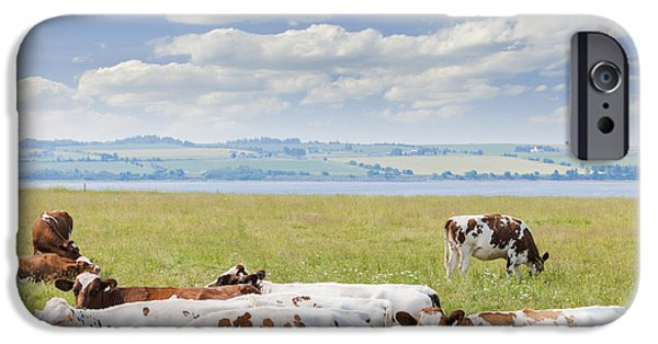 Purebred iPhone Cases - Cows in pasture iPhone Case by Elena Elisseeva