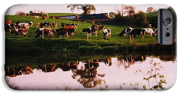 Fauna iPhone Cases - Cows In The Canal iPhone Case by Martin Howard