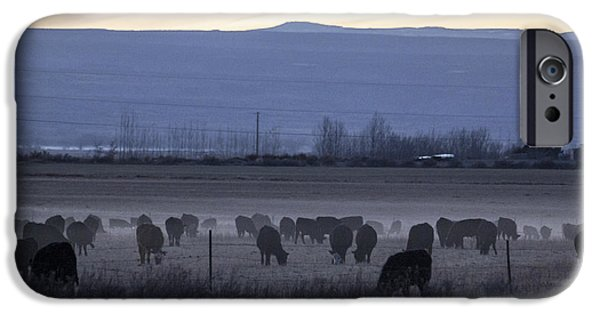 Temperament iPhone Cases - Cows In The Mist 2 iPhone Case by Janice Rae Pariza