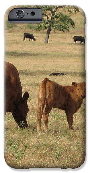 Cows in the Pasture iPhone Case by Maureen J Haldeman