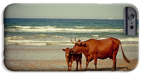 Coast Pyrography iPhone Cases - Cows On Sea Coast iPhone Case by Raimond Klavins