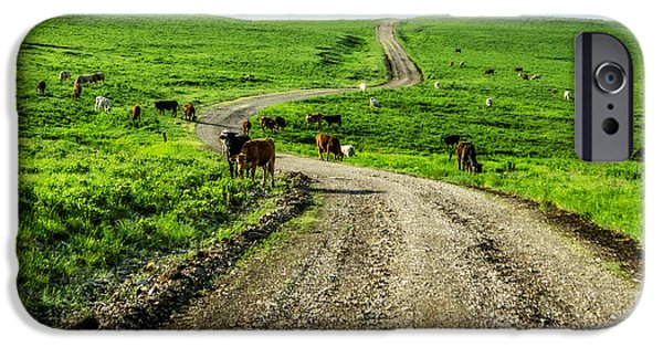 Dirty iPhone Cases - Cows on the Road iPhone Case by Eric Benjamin