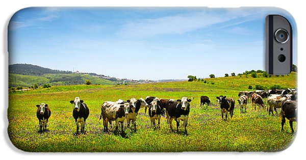 Agriculture iPhone Cases - Cows Pasturing iPhone Case by Carlos Caetano