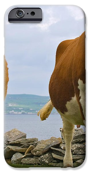 Cows iPhone Case by Terry Whittaker
