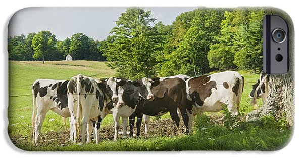 Barbed Wire Fences iPhone Cases - Cows Under Tree In Farm Field Summer Maine Photograph iPhone Case by Keith Webber Jr