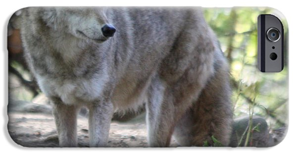 Wild Animals iPhone Cases - Coyote iPhone Case by John Telfer