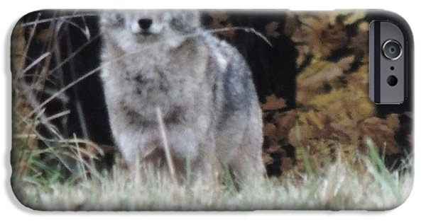 Todd Sherlock Photographs iPhone Cases - Coyote Number Four iPhone Case by Todd Sherlock