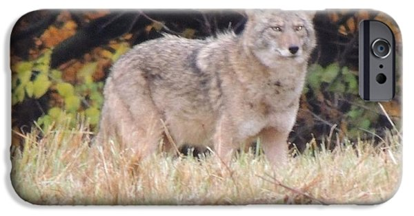 Todd Sherlock Photographs iPhone Cases - Coyote Number Three iPhone Case by Todd Sherlock