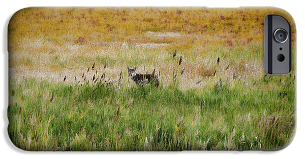 Rainy Day iPhone Cases - Coyote of Antelope Island iPhone Case by Donna Van Vlack