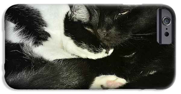 Litter Mates iPhone Cases - Cozy iPhone Case by Kathy Barney