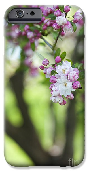 Apple Trees iPhone Cases - Crab Apple Snow Cloud Tree Blossom iPhone Case by Tim Gainey