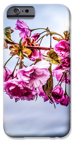 Crab Apple Tree iPhone Case by Bob Orsillo