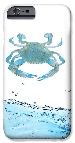 Color iPhone Cases - Crab Strolling Around iPhone Case by Sheela Ajith