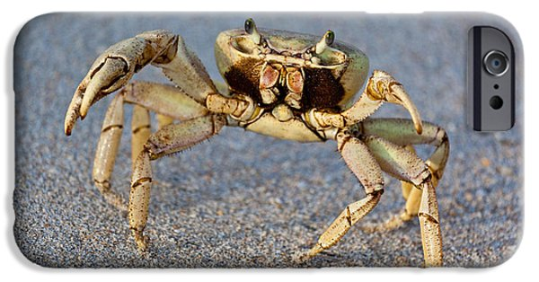 Michelle iPhone Cases - Crabby iPhone Case by Michelle Wiarda
